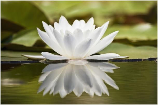 Mindfulness - článek